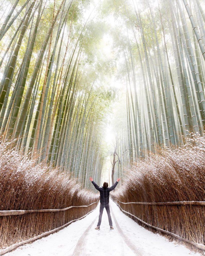 Kyoto có gì nổi tiếng Rừng trúc Arashiyama