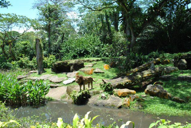 Vé Singapore Zoo