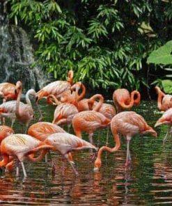 ve-singapore-jurong-bird-park - Vé Vườn Chim Jurong Singapore