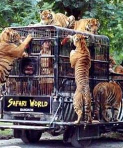 Vé Safari World Bangkok