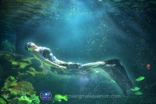 Vé tham quan thủy cung Chiang Mai Zoo Aquarium