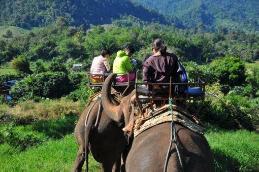 Tour cưỡi voi 1 ngày ở Chiang Mai- One Day Elephant Safari Tour