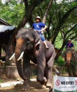Tour cưỡi voi 1 ngày ở Chiang Mai- One Day Elephant Safari Tour