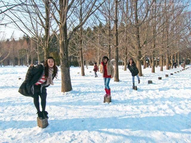 dao-nami-han-quocnami island winter trees