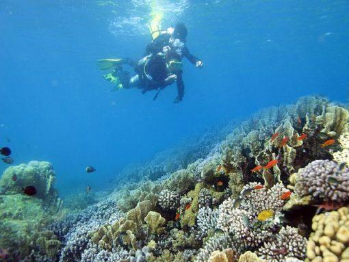 Tour Phú Quốc Câu Cá - Lăn Biển Ngắm San Hô