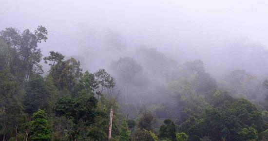 Tour Tham Quan Vườn Quốc Gia Taman Negara Qua Đêm