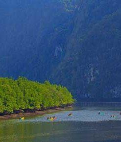 Đi Kayak Tham Quan Rừng Ngập Mặn Krabi