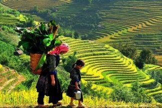 Tour du lịch Hà Nội - Sapa 2 ngày 1 đêm