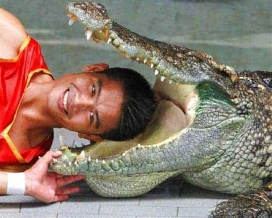 Tour ghép tham quan xem show Voi và trang trại Cá Sấu