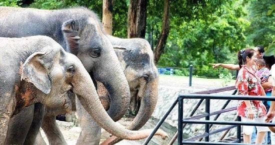 Vé tham quan Khao Kheow Zoo