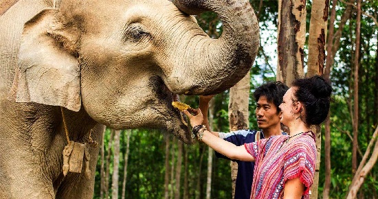 Tour Elephant Jungle Sanctuary Pattaya