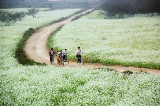 Tour du lịch Hà Nội - Mộc Châu 2 ngày 1 đêm
